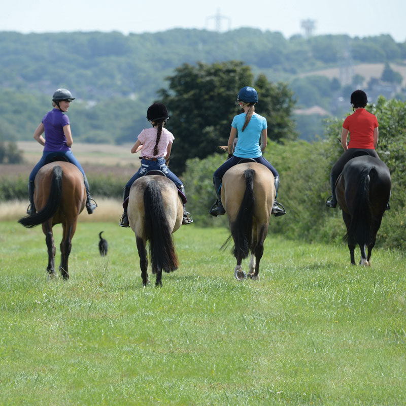 group horse riding in the countryside